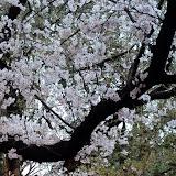 2014 Japan - Dag 1 - mike-P1050481-0017.JPG