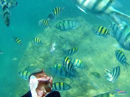 pulau harapan, 5-6 september 2015 skc 013