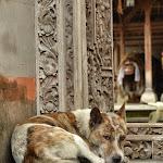zmora Bali - hordy psów. w dzień pracują nad dobrym PR-em