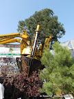 Maszyna do przesadzania dużych drzew