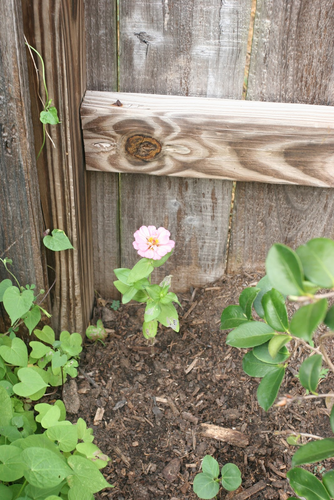 Gardening 2012 - IMG_3297.JPG