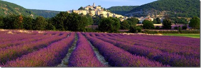 Lavender_at_Banon_Provence_France