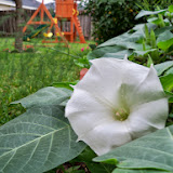 Gardening 2014 - 116_1839.JPG