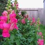 Gardening 2012 - 115_1273.JPG