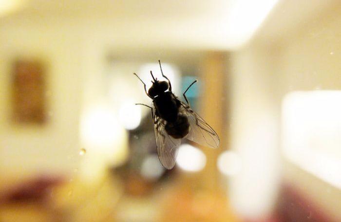 Kisah Lalat Ini Mengajari Kita Bedanya Keras dan Kerja Cerdas