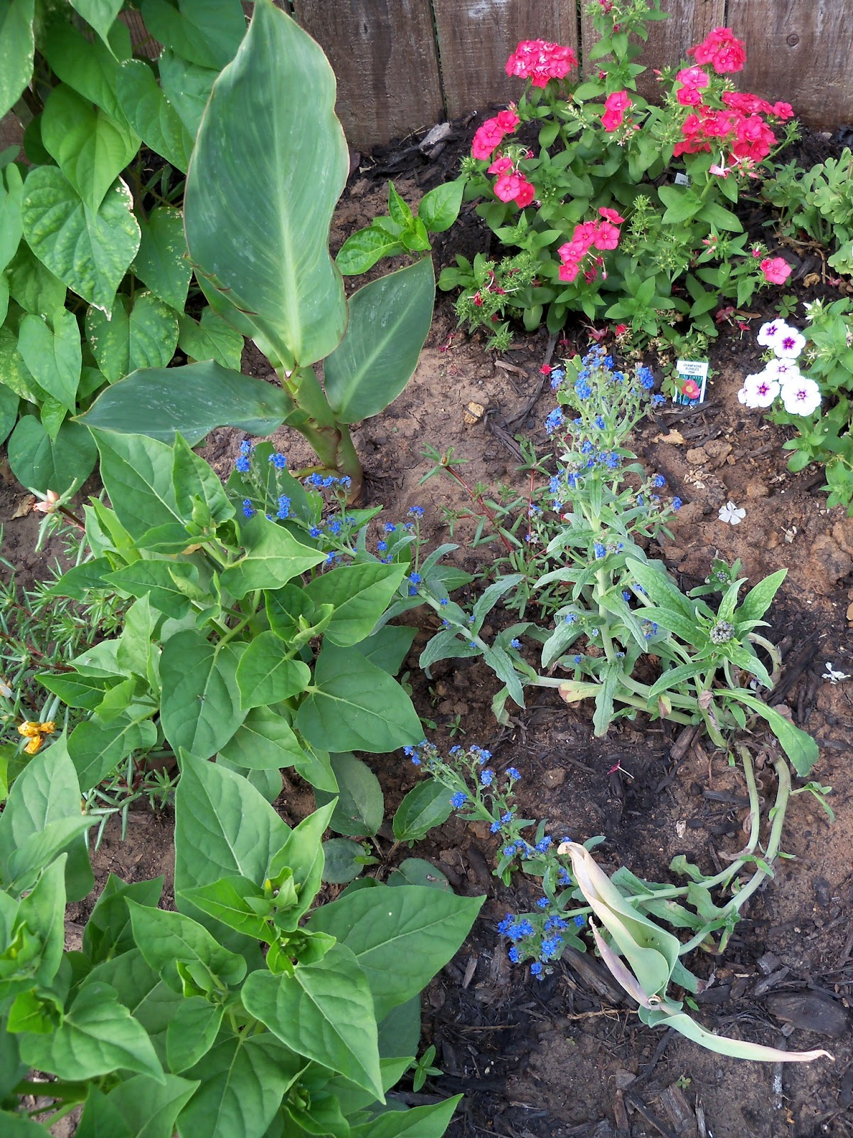 Gardening 2011 - 100_7721.JPG