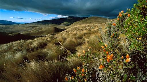 Cotopaxi National Park, Ecuador.jpg