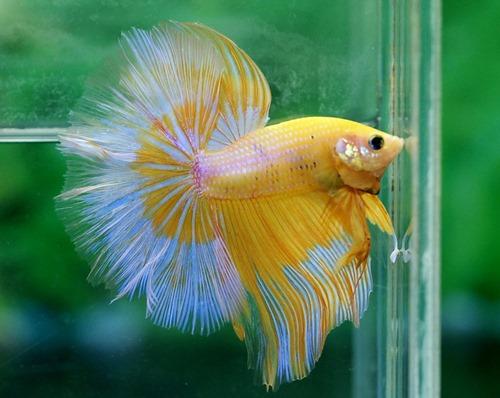betta-fish-5-gallon-fish-tank-(35)