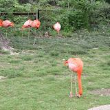 Zoo Snooze 2015 - IMG_7332.JPG