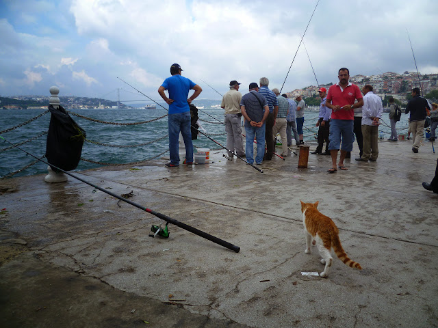 An Asian Cat waiting for it's dinner, with European Istanbul in the distance.