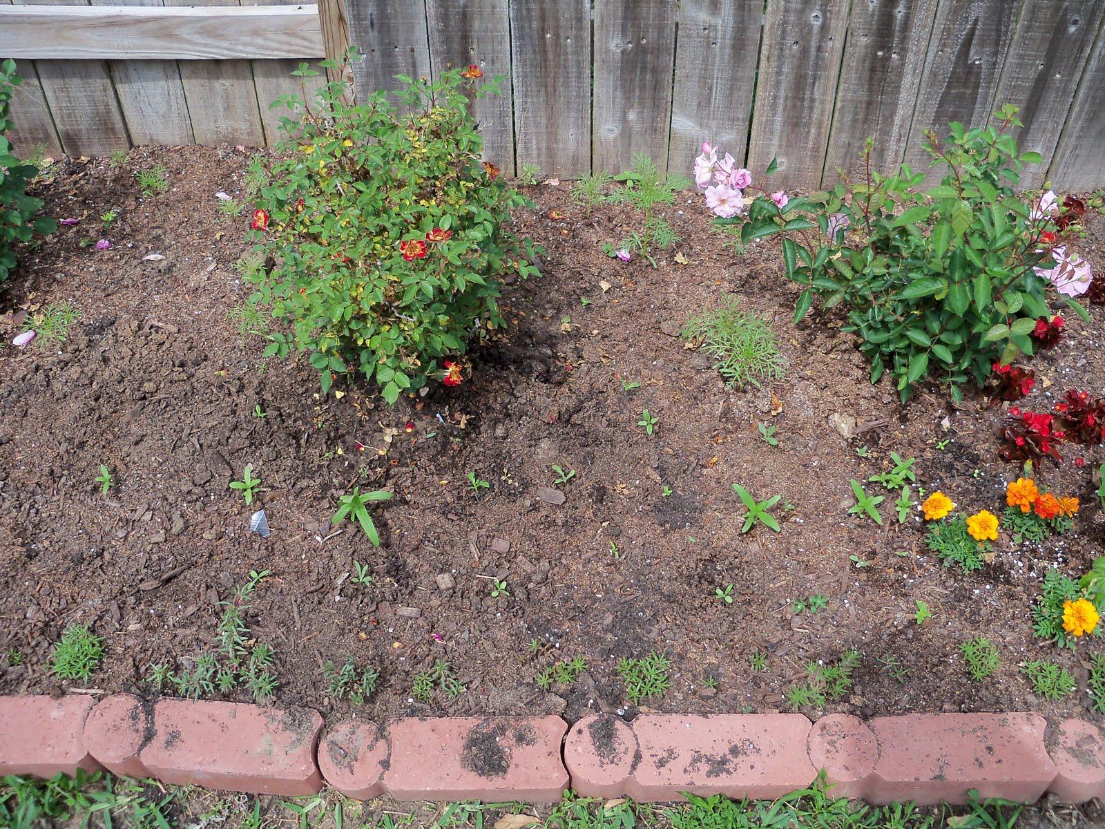 Gardening 2010 - 101_1074.JPG