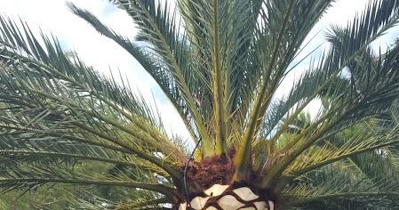 Verticalia valencia poda de arboles y palmeras for Saneamientos valencia