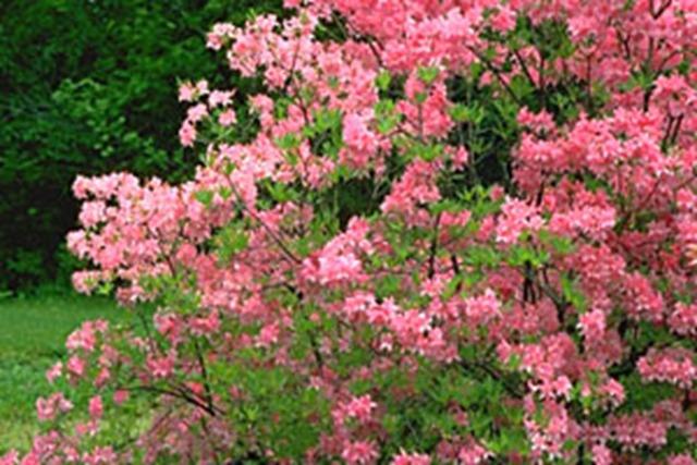 1-pink-lights