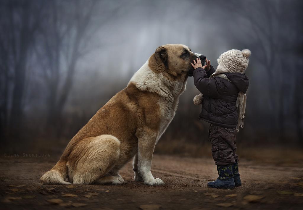 Chó là bạn thân của con người
