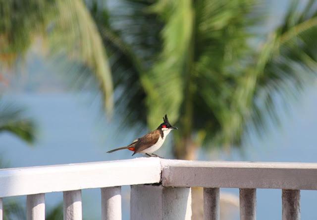 Sur la terrasse du petit-déjeuner, Andaman