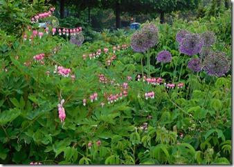 6 bancroft flowers