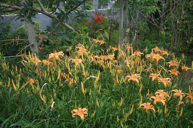 Futur jardin d'orchidées!!! IMG_3516
