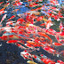 Hadapi MEA, Rantai Produksi Ikan Hias Harus Diperkuat