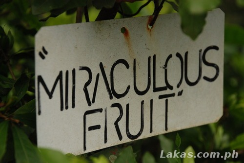 Miraculous Fruit