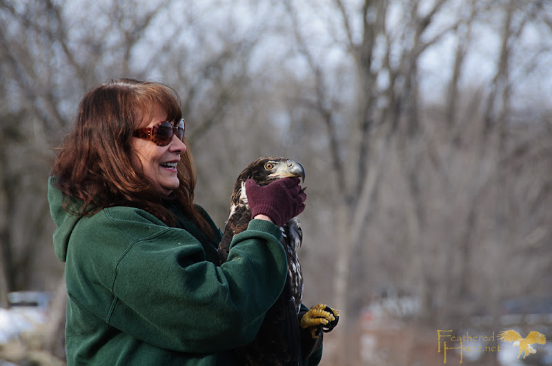 Marge Gibson of Raptor Education Group redirects the gaze of a rehabilitated immature bald eagle toward it's new life out across the Wisconsin River.