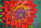 """Glowing Dahlia"" by Bill Black - 1st place A General"