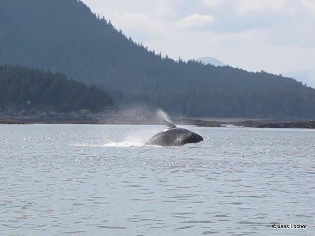 2009 - Whale3.jpg