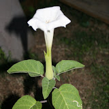 Gardening 2012 - IMG_3078.JPG