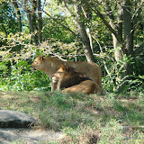 Pittsburgh Zoo Revisited - DSC05107.JPG