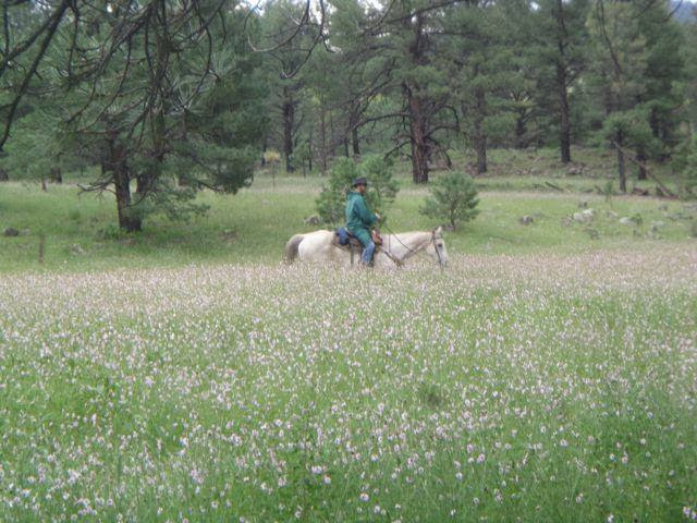Riding the wildflowers