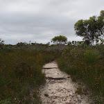 Track to Aboriginal Engraving (90477)