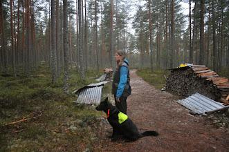Photo: Aina og Ulvehiets Back in Black (Vilma) er klare til å rundere