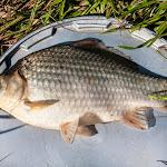 20140730_Fishing_Tuchyn_071.jpg