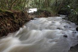 Creek in Twin Falls.