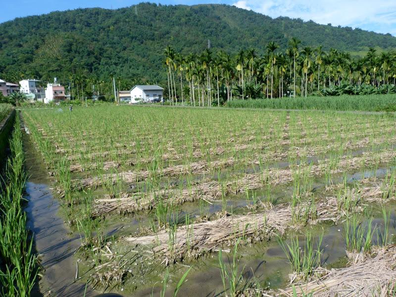 Puli  en passant , entre autres, par les villages de l ethnie Bunum de Loloko et Dili. J 10 - P1160766.JPG