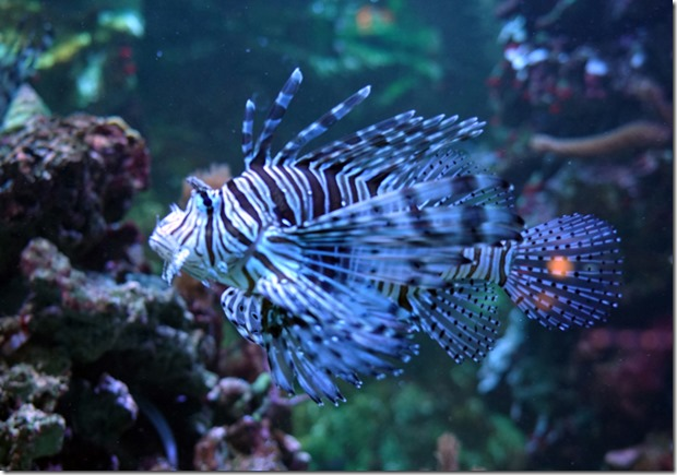paris aquarium tropicale fish 111115 00008