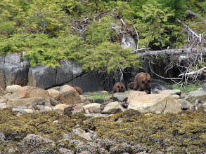 Photo: A mother Brown Bear and two cubs.
