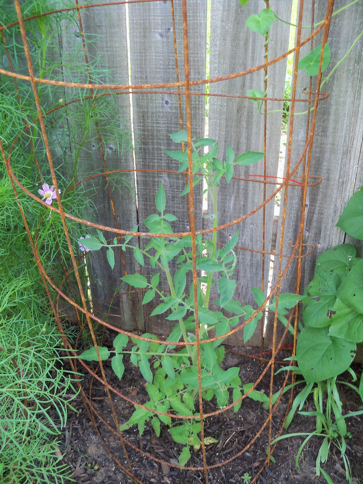 Gardening 2010, Part Three - 101_3747.JPG