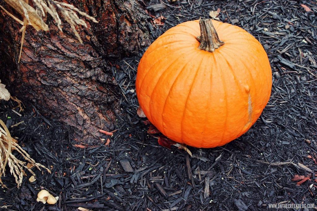 [pumpkin25%5B10%5D]