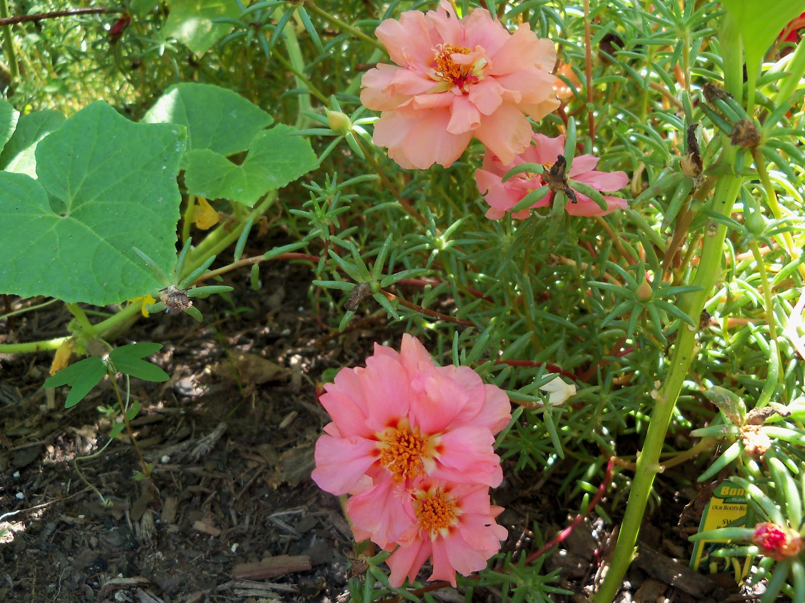 Gardening 2010, Part Three - 101_4394.JPG