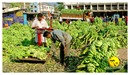DSC_0018_keralapix.com_banana market