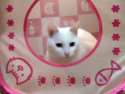 超速でビュンと飛び出す白猫ユキちゃん