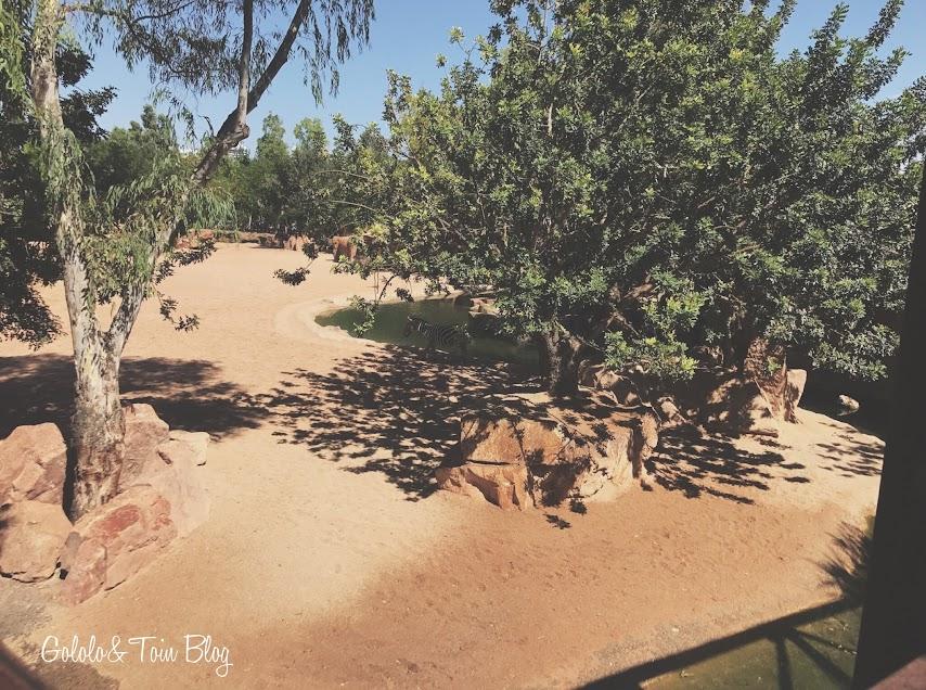 Visitar Bioparc Valencia con niños