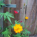 Gardening 2012 - 115_1999.JPG