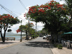 Full bloom on the malecon