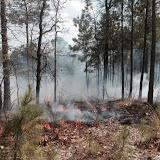 Anderson Creek Hunting Habitat - photo%2525202.JPG