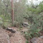 Rocks along the Birrawana Track (119638)