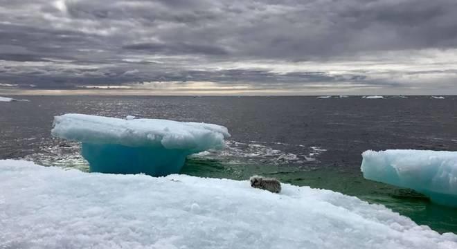 raposa-iceberg-2-07072018212737144