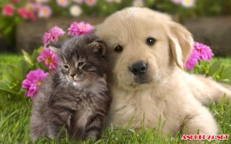 Tải Hình Ảnh Dễ Thương Của Bộ Đôi Chó Và Mèo