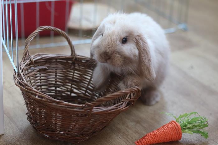 Rabbit Loop, rabbit children, montessori rabbits, Easter montessori
