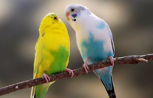 200+ Most Adorable Birds in the World 3